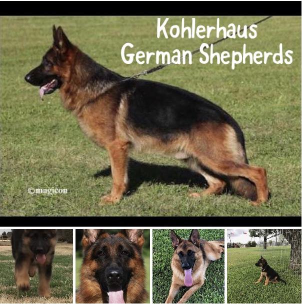 Köhlerhaus German Shepherds: Pet Services | Crowley, Fort Worth and